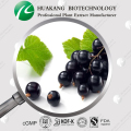 100% Natural Black Currant Extract Powder 5%,10%,15%,25% Anthocyanidins