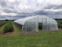 Tunnel Plastic Greenhouse