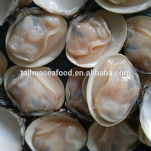 Wholesale Meretrix lyrata Frozen Seafood Hard Clam