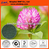 Buy Natural Red Clover Flower Extract