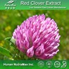 Pure Natural Red Clover P.E./Red Clover P.E. Isoflavone/High Quality Red Clover P.E.