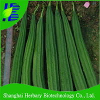 2016 Hot sale sponge gourd seeds for sowing