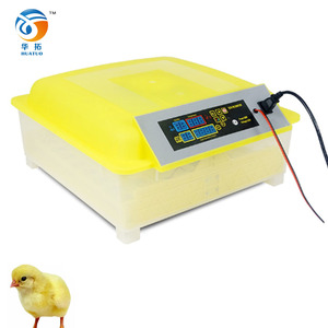 Commercial Chicken Top Selling In Spain Cheap Incubator Egg