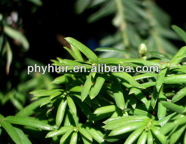 Taxus baccata paclitaxel extract--paclitaxel 98%