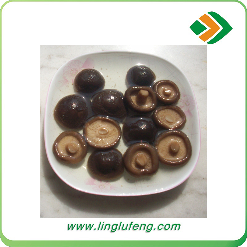 competitive price for good market canned slice mushroom by china canned food factory