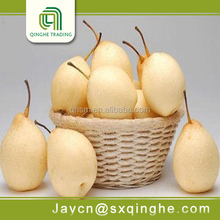 ya fresh pear import from china