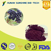 Factory Supply Maqui berry extract 4:1-20:1 Treat Haemorrhoids