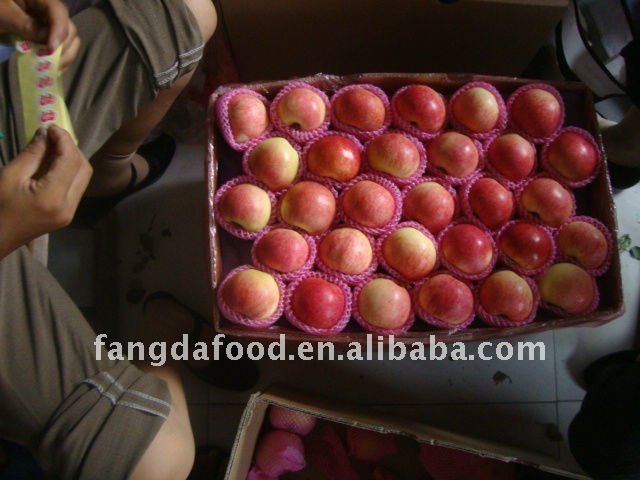 apple fruit fresh / fuji apple price