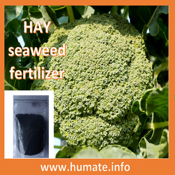 brown natural soluble seaweed extract fine powder