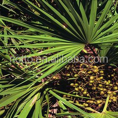 Fatty acid 100% Nature Saw Palmetto Extract Extract with best quality & competitive price