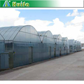 Agricultural High Quality Winter Multi Span Greenhouse Low Price