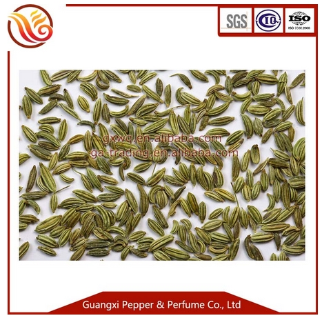 Fennel seed for sell China spices and Herbs cleaned fennel seed
