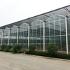 The Hot Sale Agricultural Glass Greenhouse
