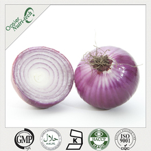 Onion Extract powder /1%-40% Quercetin /health food supplement