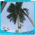 Camouflaged Palm Tree Pole for Telecom