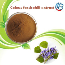 LanBing supply Organic chinese dried herb Coleus forskohlii extract powder