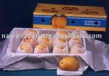 Alphonsa Mango from India for export