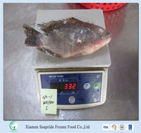 Export High Quality Frozen Black Tilapia And Frozen Red Tilapia