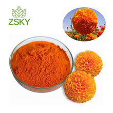 Main Product Lutein from Marigold Flower Extract for Pigment, Vision Health