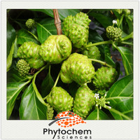 Chinese plant Antioxidant function Noni Extract 4% Polyphenols