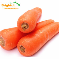 High quality Carrot Powde