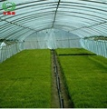 High Quality Agricultura Muti-Span Film Greenhouse for Sale