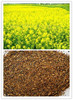 Import And Export CP36% Rapeseed Meal For Animal Feed