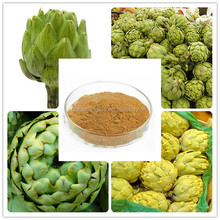 Organic Natural High Quality with Best Price 0.5%-5% Cynarin Artichoke Leaf Extract