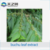 Factory direct supply buchu leaf extract/buchu leaves extract powder with competitive price
