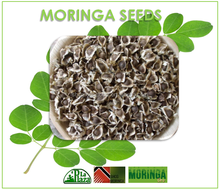 Bulk Supply Organic Moringa Seeds