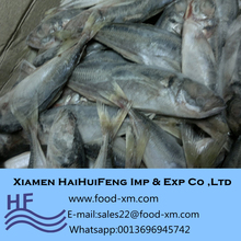 Wholesaler frozen fish frozen horse mackerel fish 20+