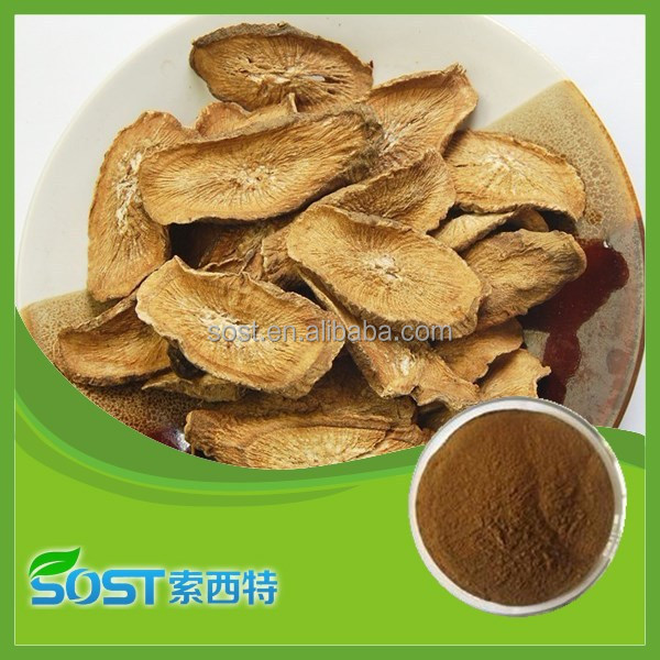 Best quality and hot sale burdock root extract with competitive price