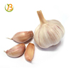 /product-detail/hot-sale-new-fresh-5cm-garlic-to-brasil-natural-garlic-with-good-quality-in-china-organic-garlic-5-5cm-62013629001.html