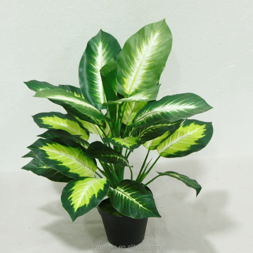 Pas cher gros ext rieur int rieur plante en pot for Plante verte exterieur pas cher