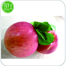new fresh organic fuji apple crop 2017