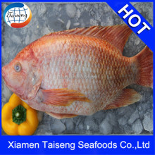 Fish farming IQF Frozen Whole Round Red Tilapia Fish For Sale