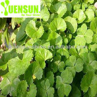 Natural Gotu Kola Extract Powder / Madecassoside (40%-95%)