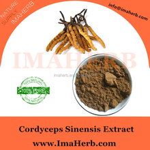 Factory Supply natural cordyceps sinensis price