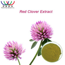 100% Natural antioxidant plant 20% Isoflavones HPLC pure red clover extract