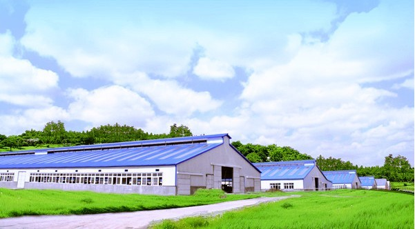 Dairy Farm Shed Design Steel Building For Poultry Barn In Bangladesh