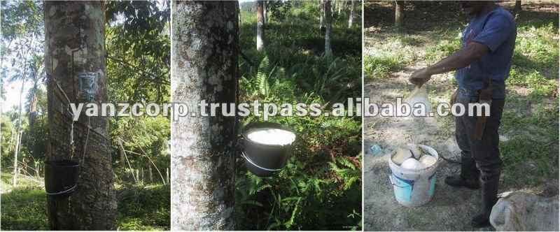 Latex Stimulant System For Rubber Trees