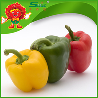 Egypt Fresh Capsicum Red and Yellow Capsicum