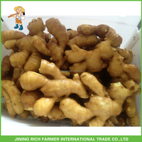 Online Wholesale Shandong Fresh Ginger 150g up Mid-East Standard 8kg PVC box