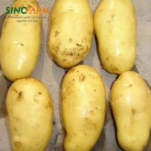 Quality fresh potatoes cheap fresh potato for importers