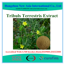 Pure Saponins 40%-90% UV Tribulus Terrestris Extract Powder With Kosher Halal ISO22000 Certificate