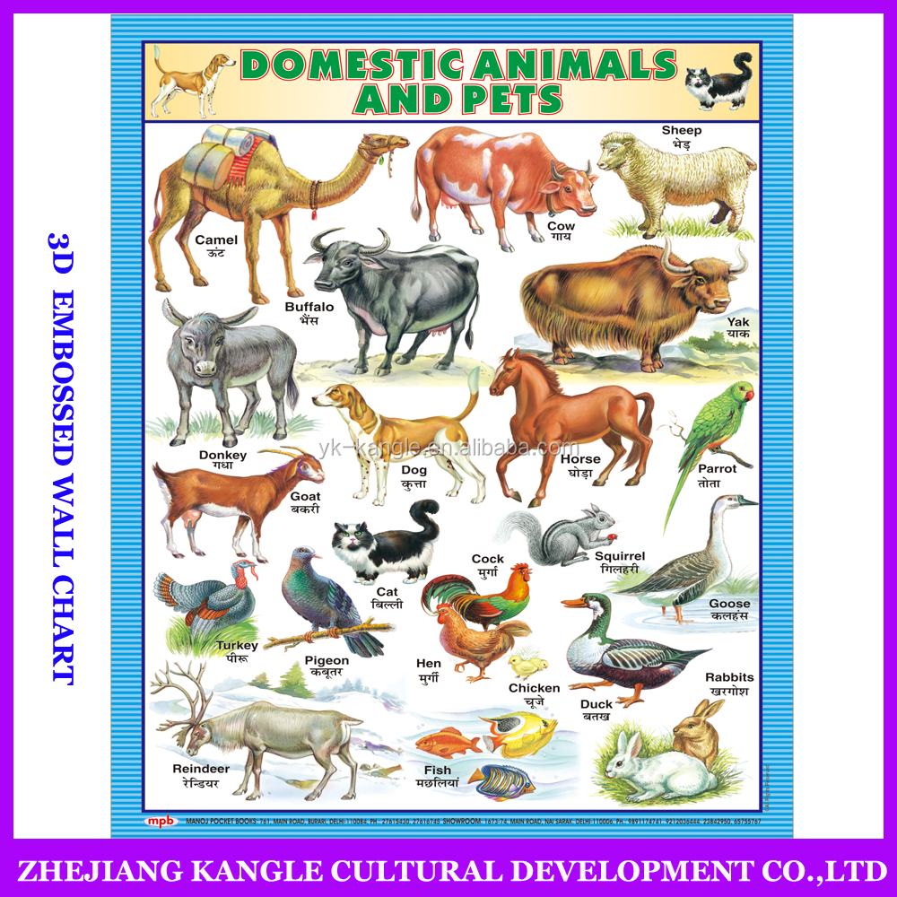 India language PVC environmentally painting educational baby toys wall chart with domestic animals and pets poster