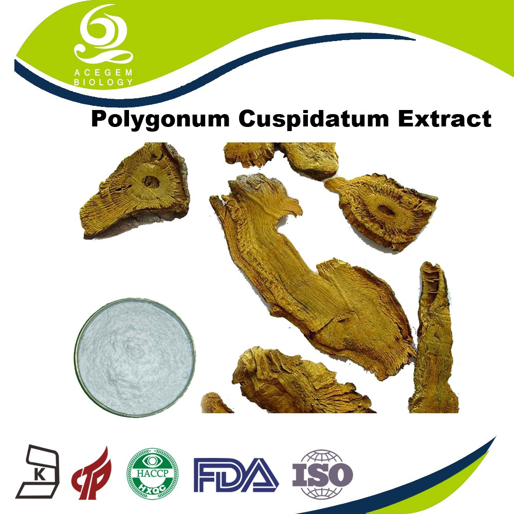 GMP Factory Supply High Quality Polygonum Multiflorum Plant Extract
