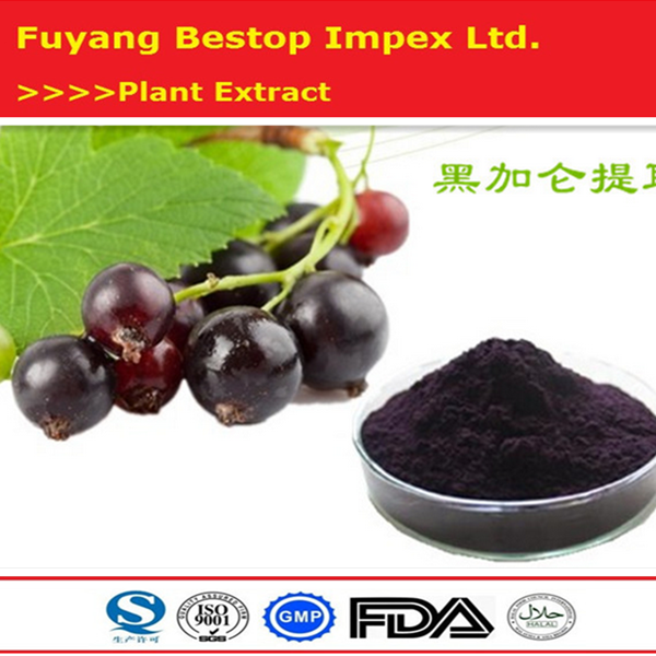 Wholesale chinese top quality plant extract black currant powder / blackcurrant extract