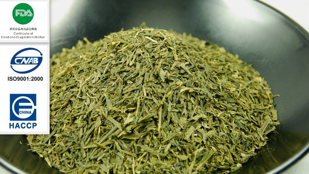 Sencha Green Tea 8913
