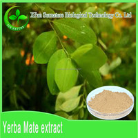 Yerba Mate Plant Extract/Paraguay Tea extract powder, Bulk wholesale Yerba mate extract
